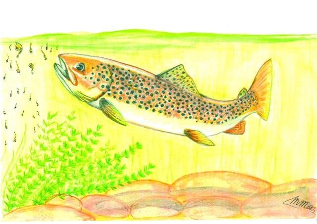 Kad se voda na povrsini uzburka, se ribe izpod hrane na puno