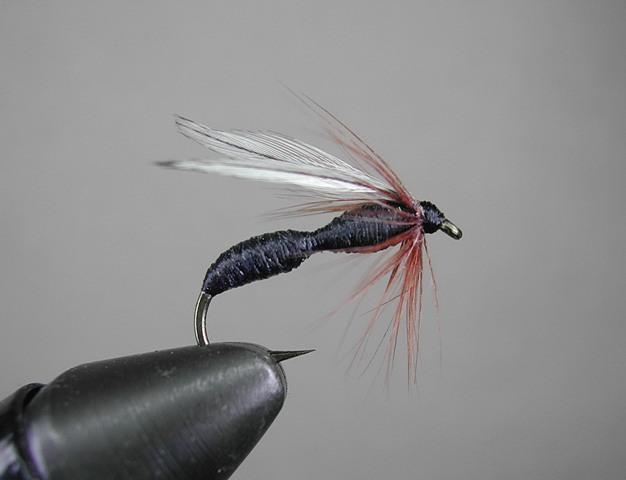 Koncani mrav za belim krilima