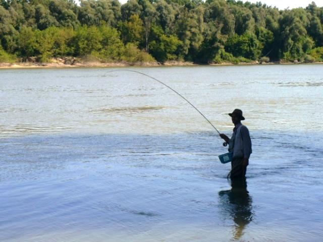 Mu_icarenje na Dunavu