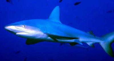 Mediteran bez morskih pasa