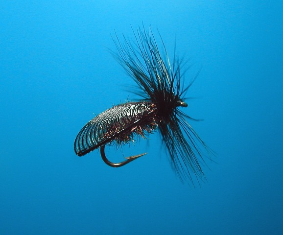 Alder Lacewing