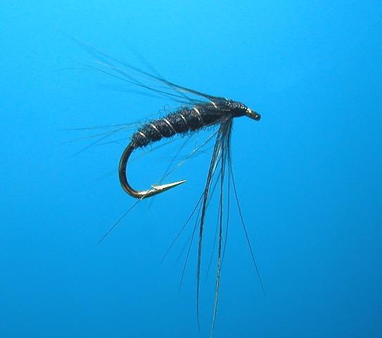 Hawthorn Black Spider