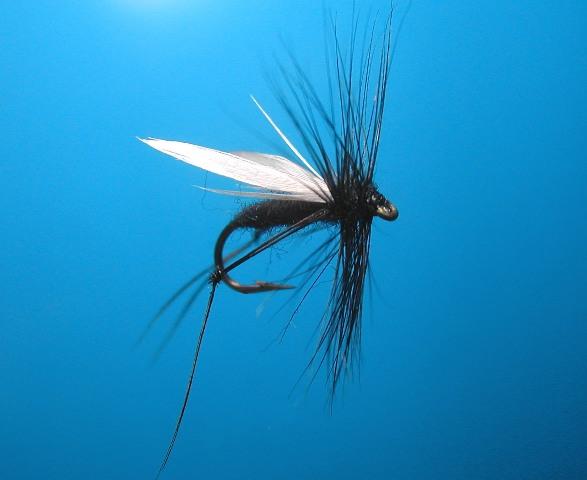 Hawthorn Dry