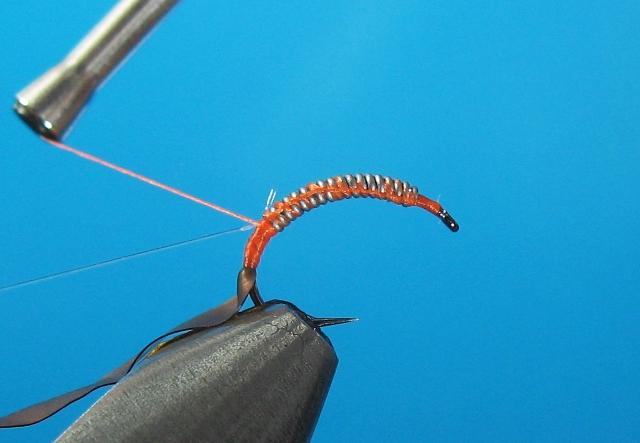 Larva tulara-05