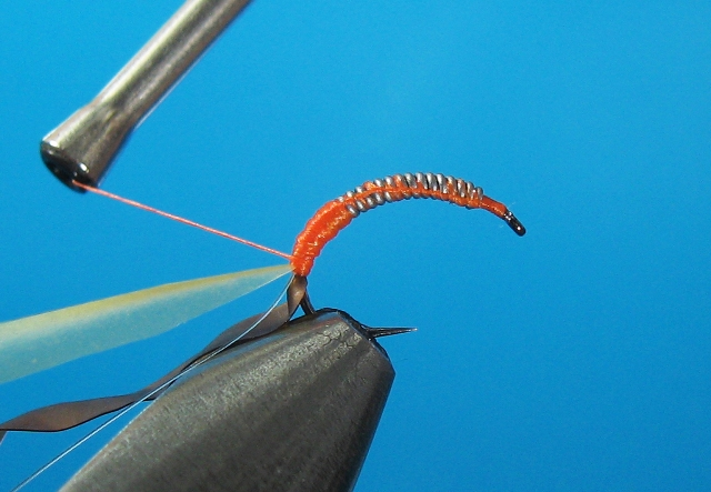 Larva tulara-06