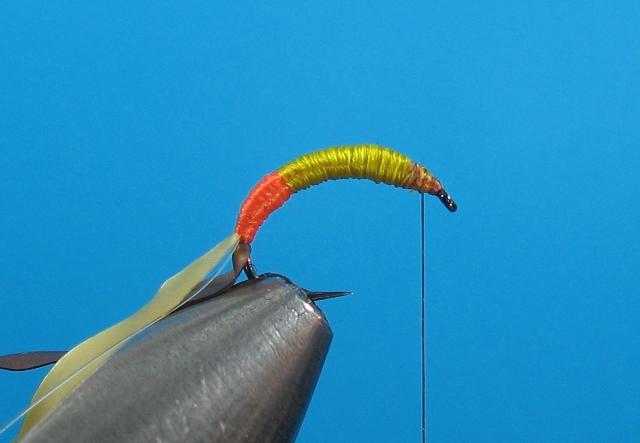 Larva tulara-09