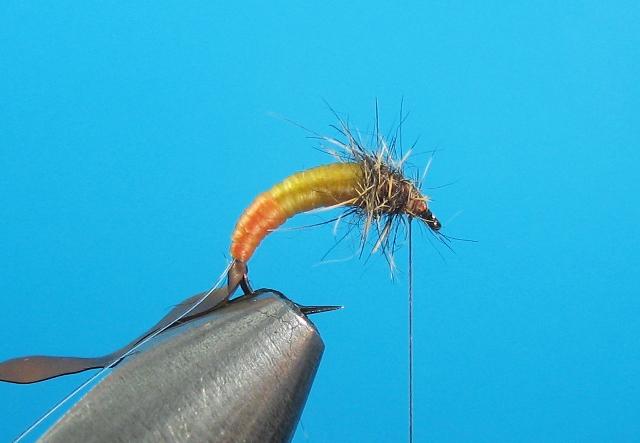 Larva tulara-13
