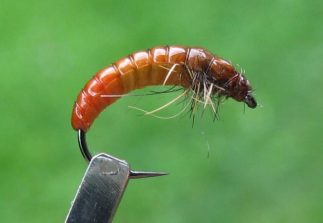 Larva Tulara
