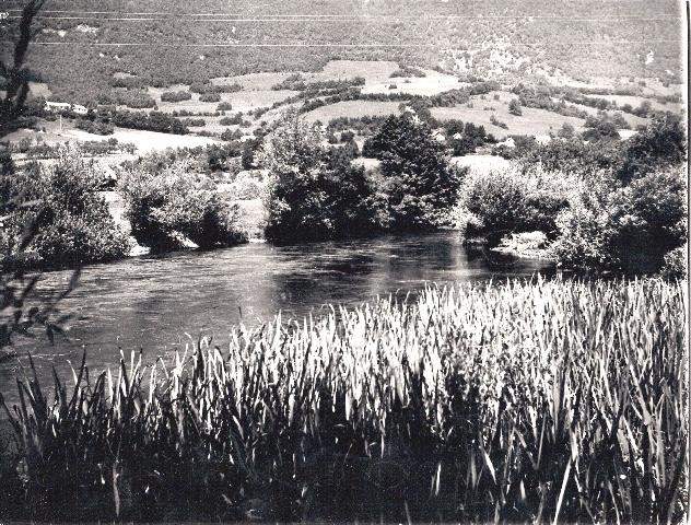 Motiv sa plive iz sredine 60-tih