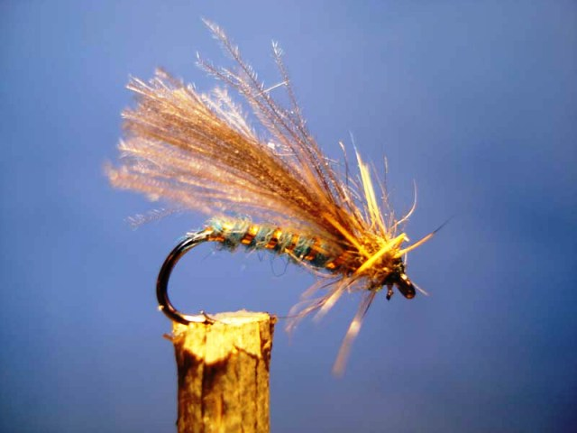 blue caddis