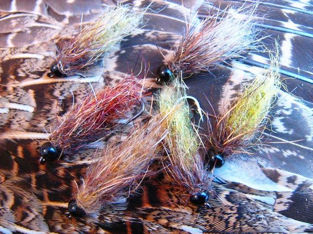 Cupave larve 0266 web