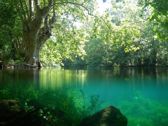 Podvodni i nadvodni snimak web