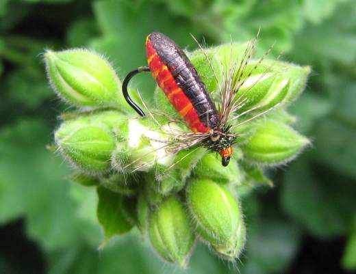 Soldier Beetle web