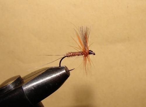 fazanov rep - dry web