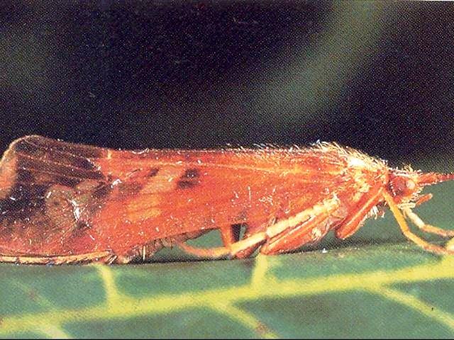 Sl.br.5- Fotka prirodnog insekta kojeg smo imitirali i zvali Sovjak web