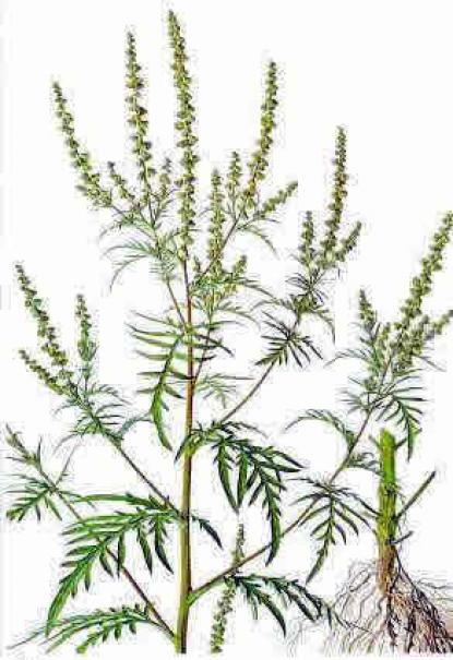 Alergene biljke po mesecima