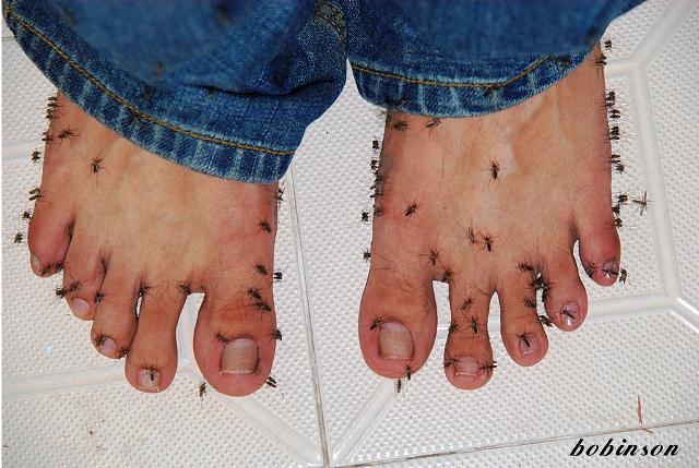 komarci na nogama web