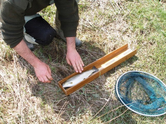 merenje duzine ribe web1