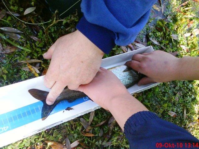 merenje duzine ribe web3