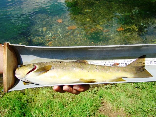 merenje duzine ribe web9