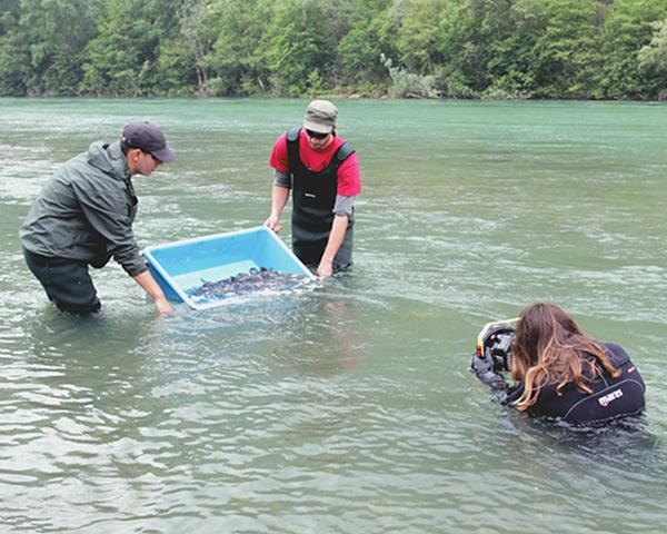 The-Story-of-a-Danube-Salmon-Liquid-Art-Releasing-Fish