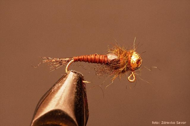 stonefly web