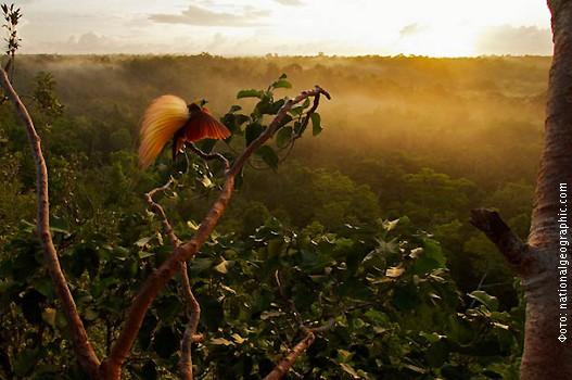 Nova-Gvineja,-foto-5