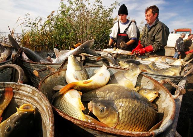 Proizvodnja ribe