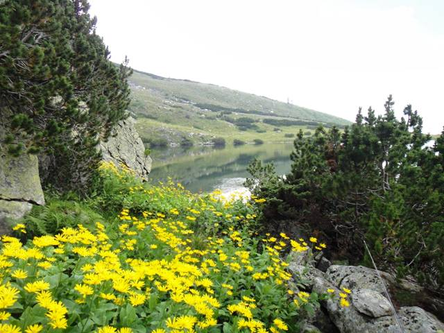 Joncevo jezero web