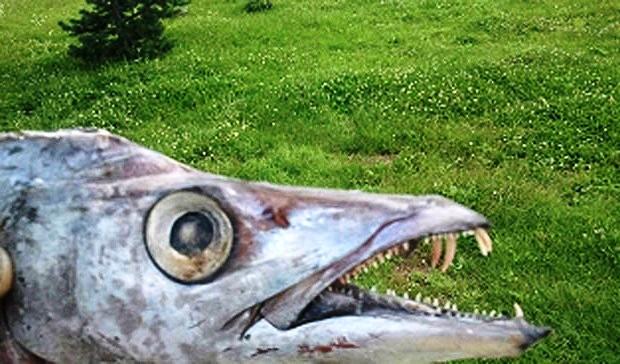 Neobična riba ulovljena u Sani!