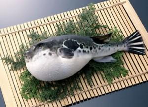 fugu web