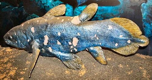 coelacanth pod vodom