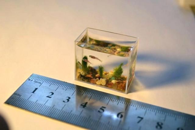 Najmanji akvarijum na svetu web