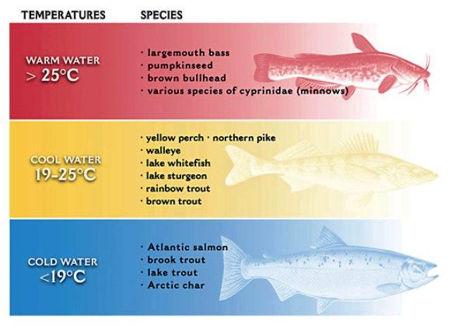 ribe i temperatura web