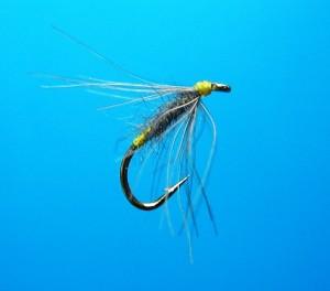 Waterhen Bloa web