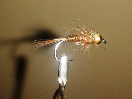Nimfa fazanka – varijant