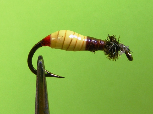 10.-Zuto-braon larva od balona web