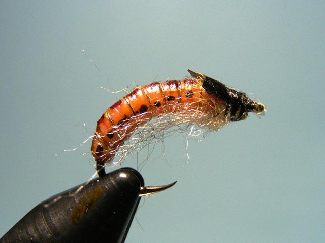 17.-Danasnje larve se mnogo razlikuju od nekadasnjih web