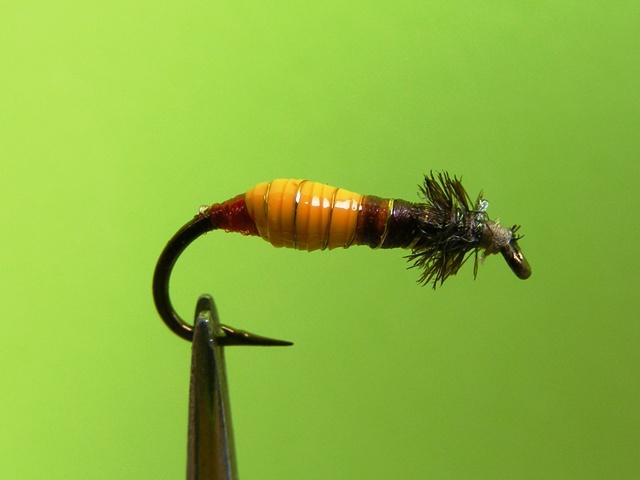 8.-Okerzuto-braon larva od medicinskog drena web
