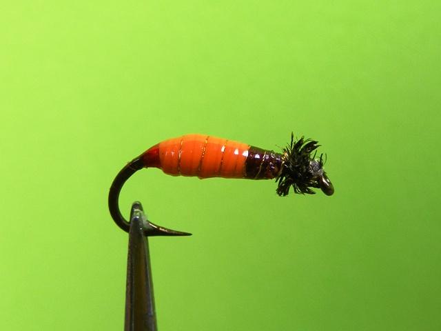9.-Narandzasto-braon larva od balona web