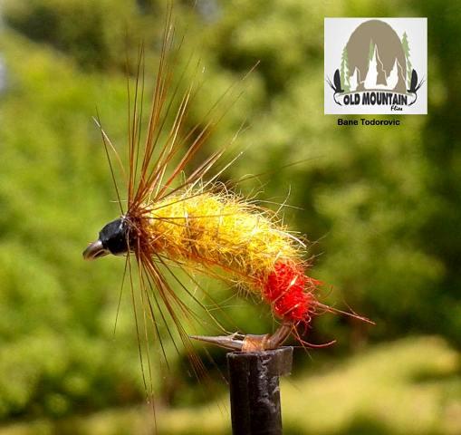 Larva tulara sa crvenim hotspotom web