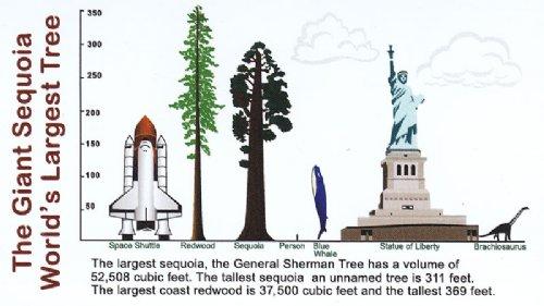 general-sherman-tree-comparison