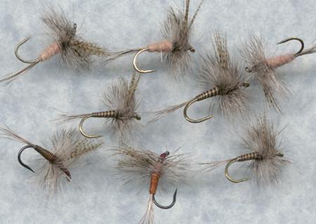 Variant mušica