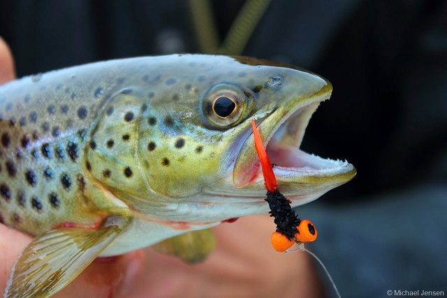 Trout_Booby_Fly_1