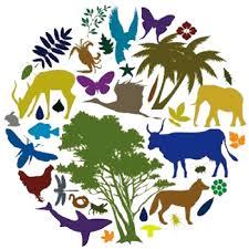biodiverzitet-ptice.info_