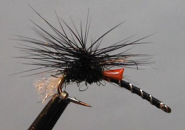 BlackBuzzer16