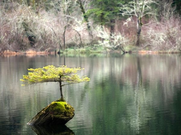 Drvo_na_povr__ini_jezera_780906624