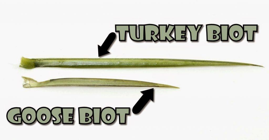 turkey-vs-goose-biot