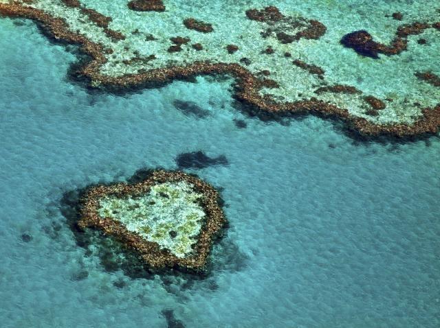 najveci-koralni-greben-mrtav-web