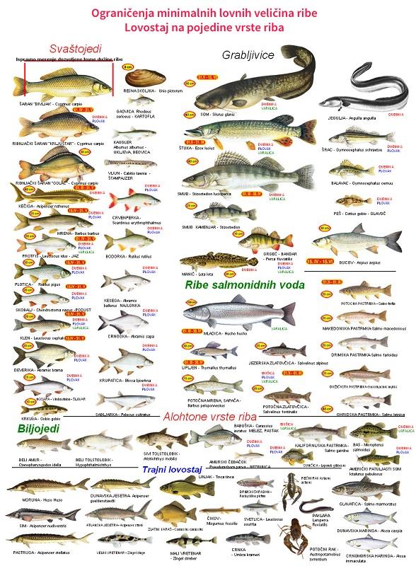 ribolovne-mere-i-lovostaji